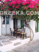 Grèce Photos: Un Kafenion traditionnel à Sifnos
